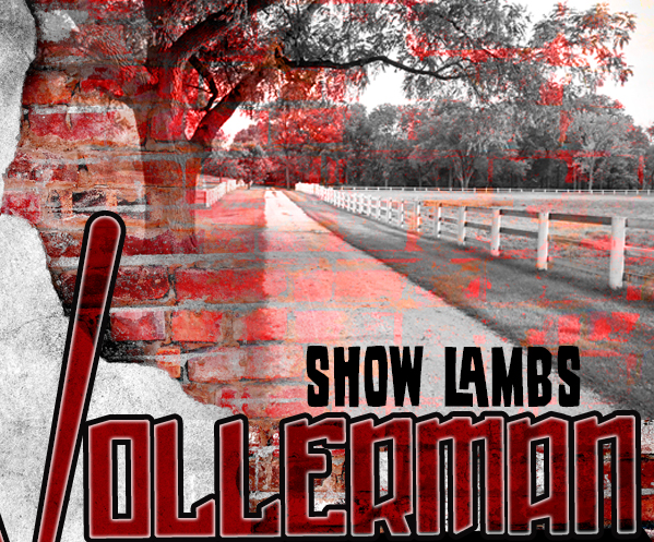 Wollerman Show Lambs